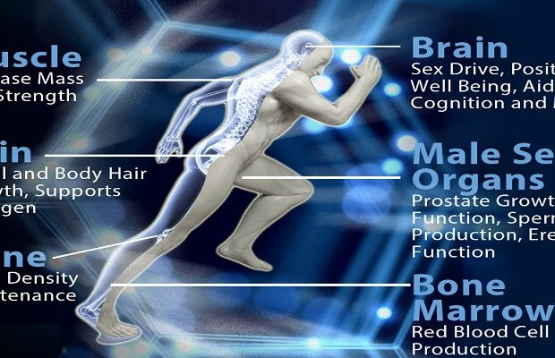 Optimum Testosterone Levels1