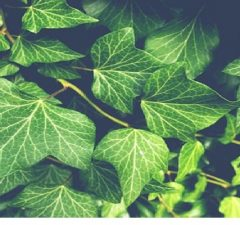 Plants That Can Be Used for Health Purposes1